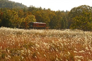 信楽高原鐵道秋のすすき